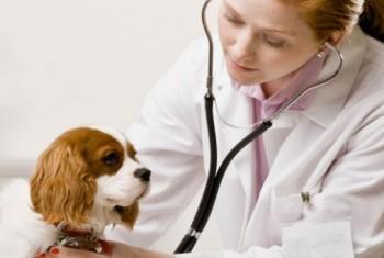 cropped-consultorio-veterinario-huellas-banner-0.jpg
